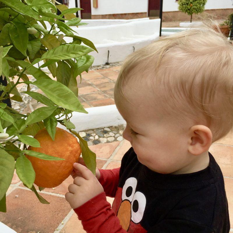 Je pluk de sinaasappels zo van de bomen!