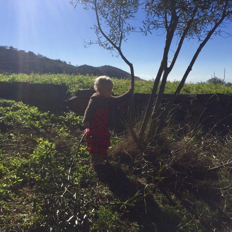 In de olijfgaard achter de Finca.