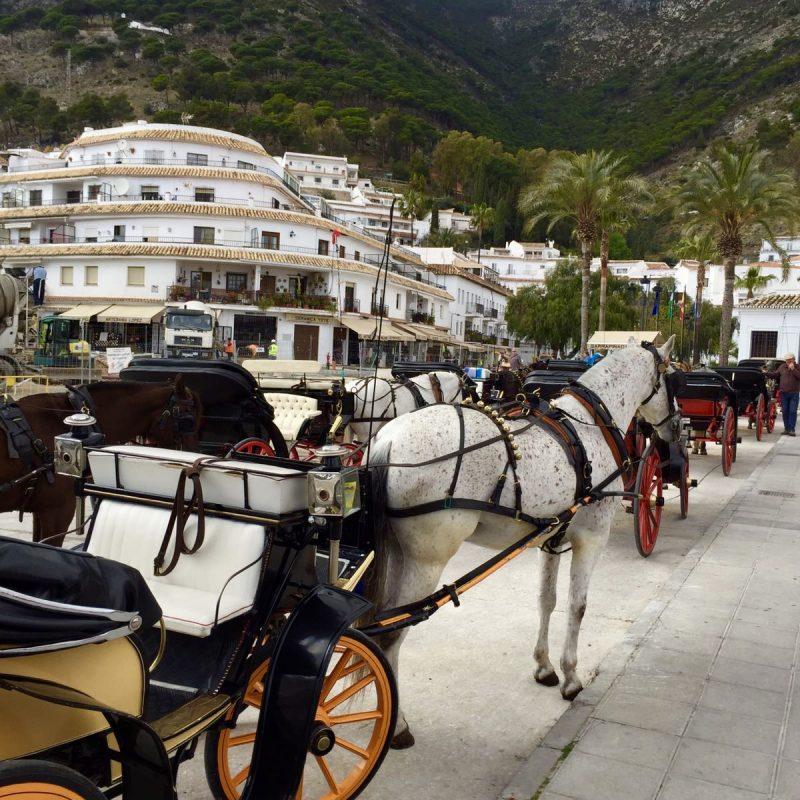 Een ritje op een ezel of paard in Mijas