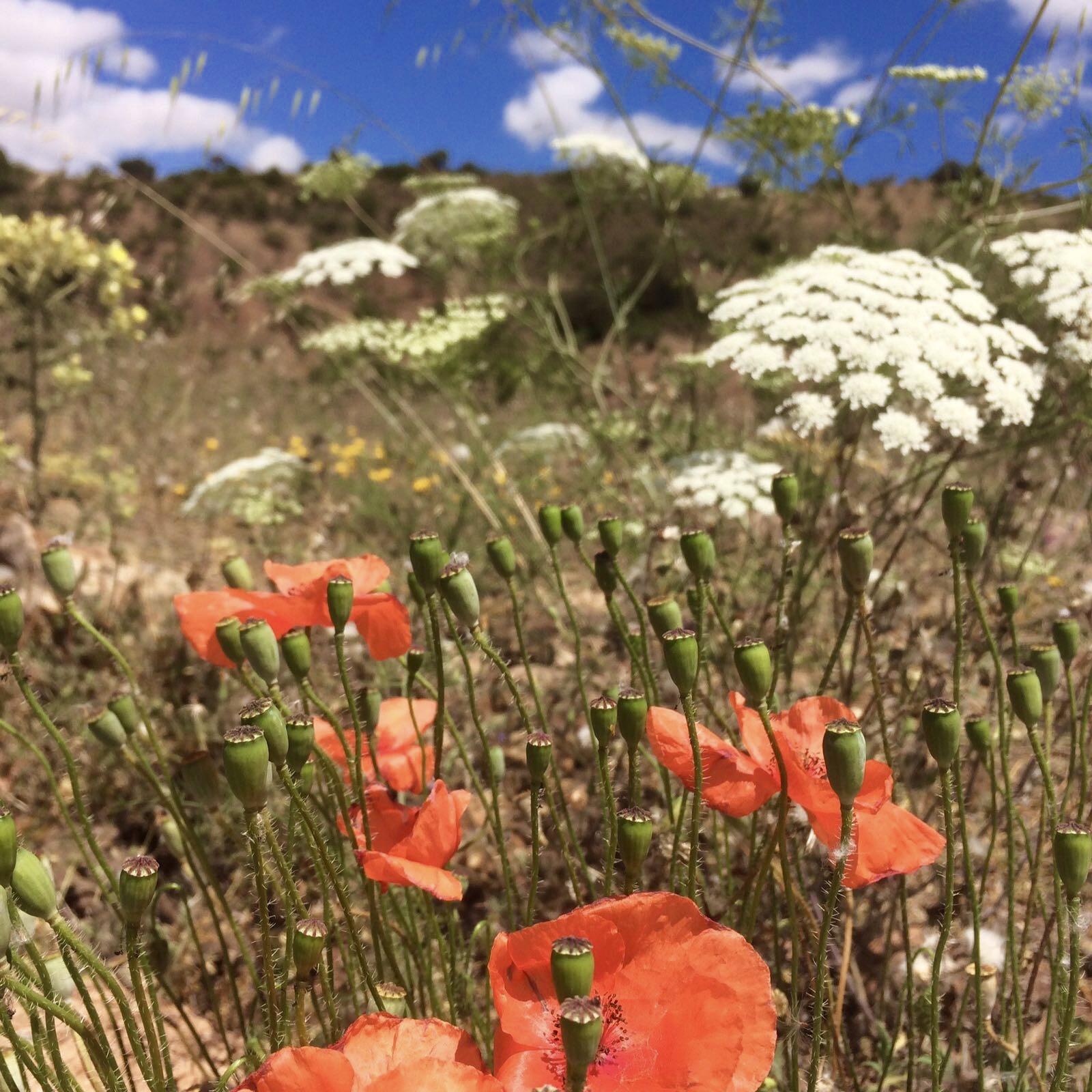 Prachtige bloemen overal
